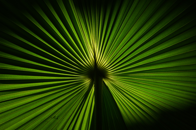 Green rays by Wojciech Grencer