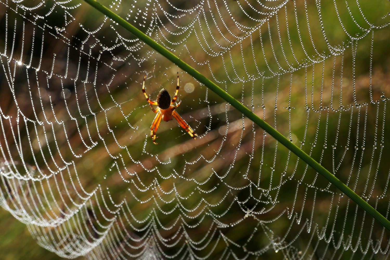 Backlit spider by Wojciech Grencer