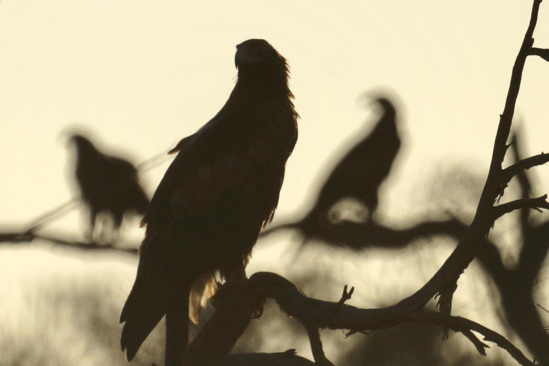 Gathering of eagles by Wojciech Grencer
