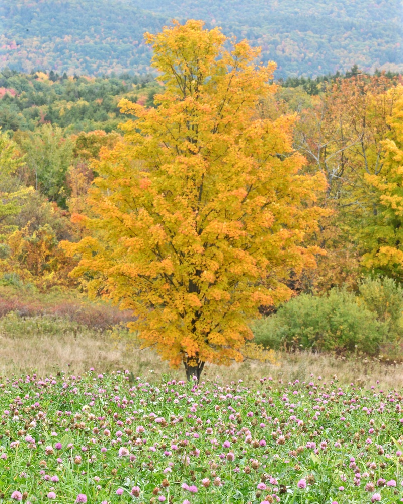 Fall color by John Taylor