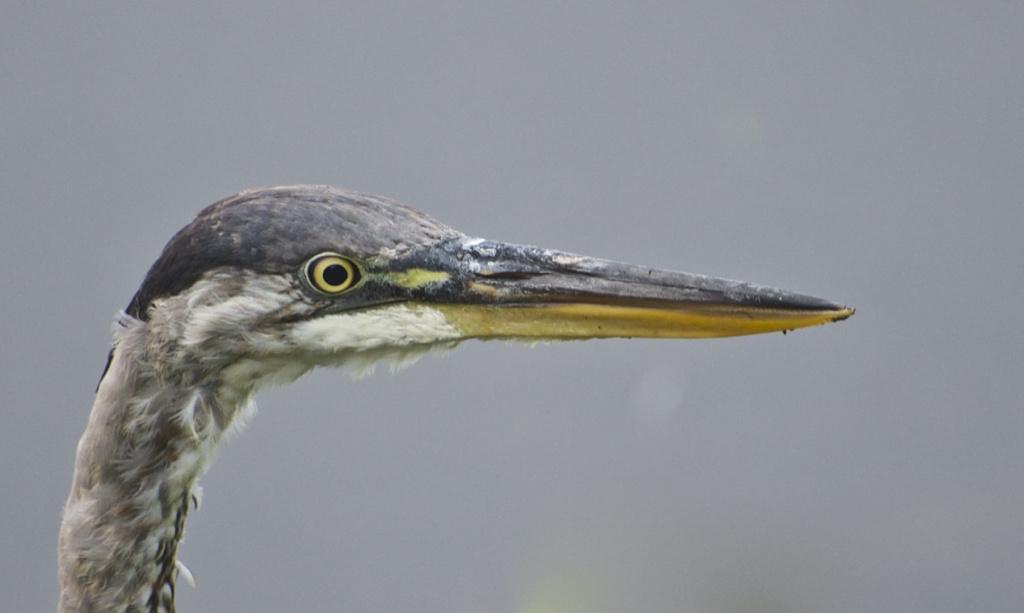 Big Bird by John Taylor