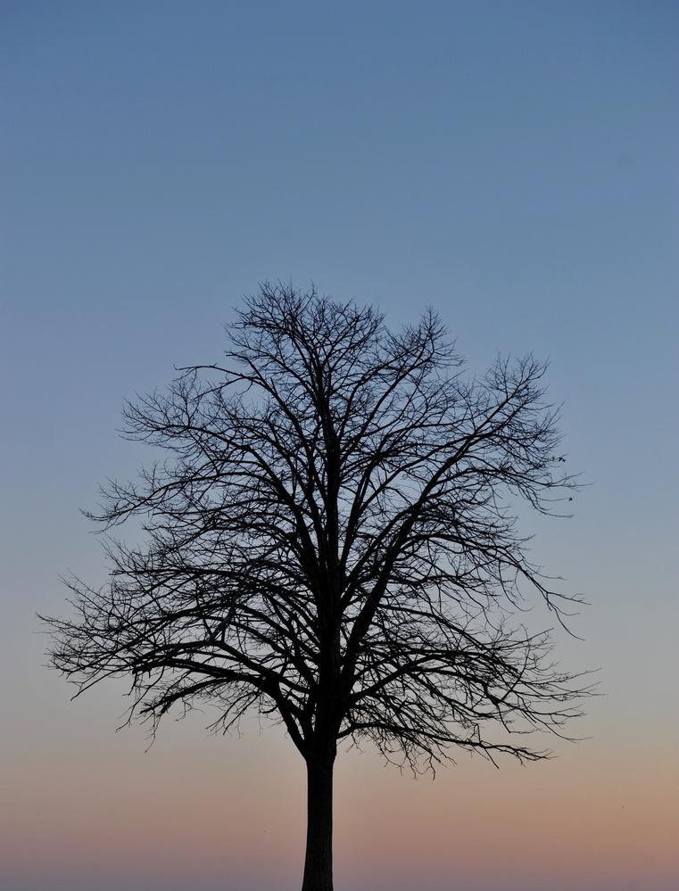 Ocean Tree by John Taylor