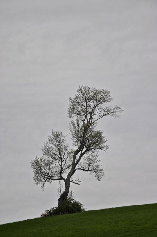 Solo Tree by John Taylor