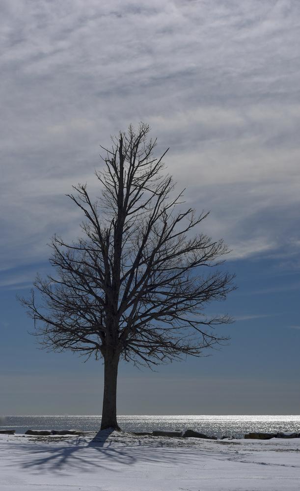 Signal Tree by John Taylor