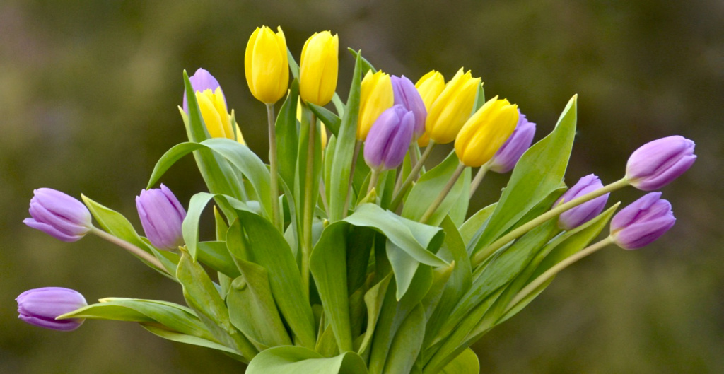 Colorful Blooms by John Taylor