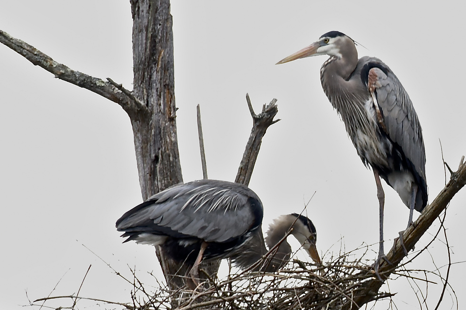 New Residents by John Taylor