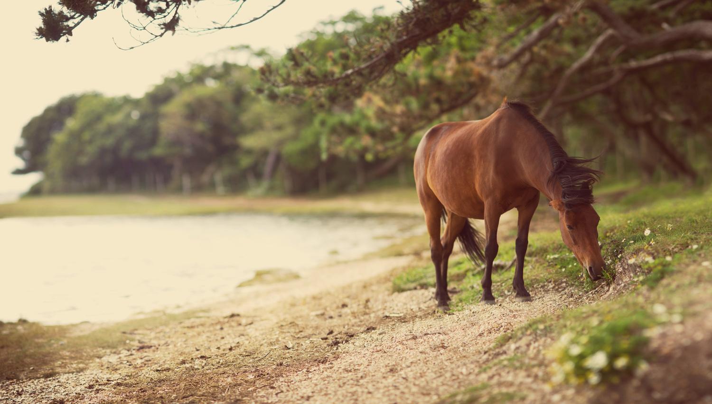 Sea Horse by Edward Noble
