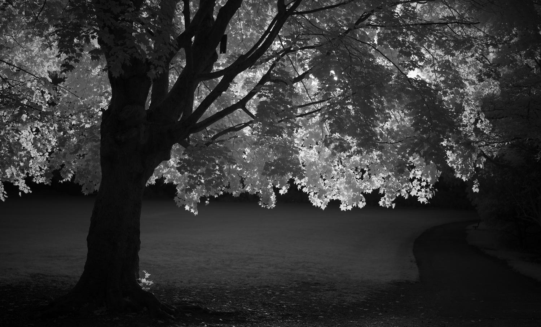 Backlit by Edward Noble