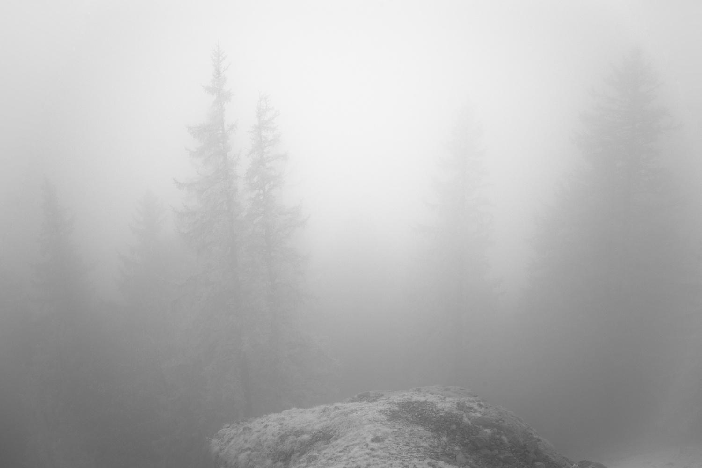 Pine Fog by Edward Noble