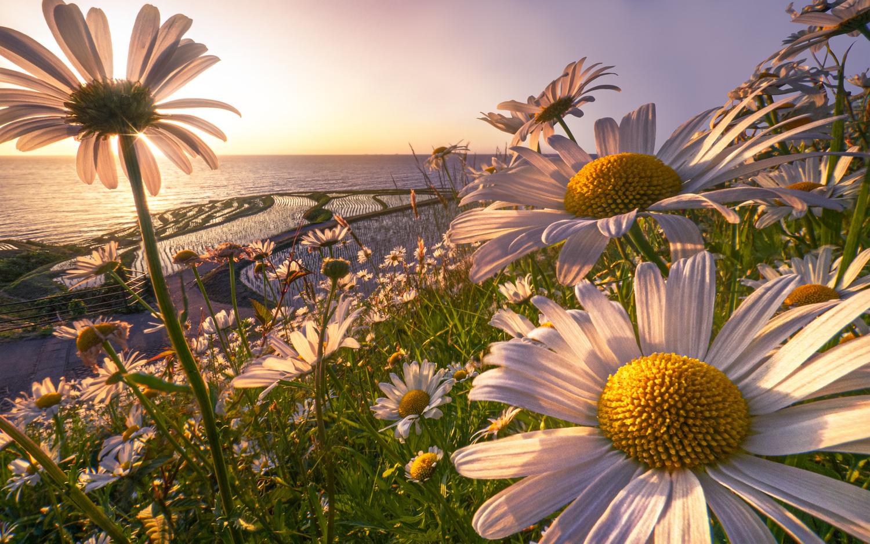 Full bloom. by Taiyo Yamamoto