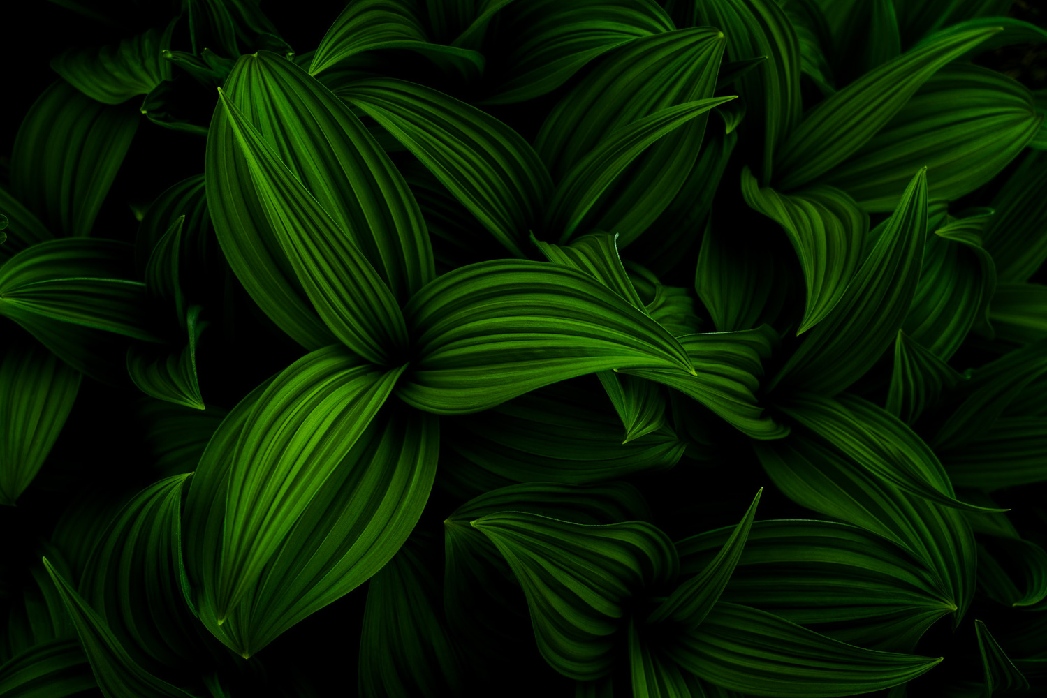 Wild Plants by TYLER YATES