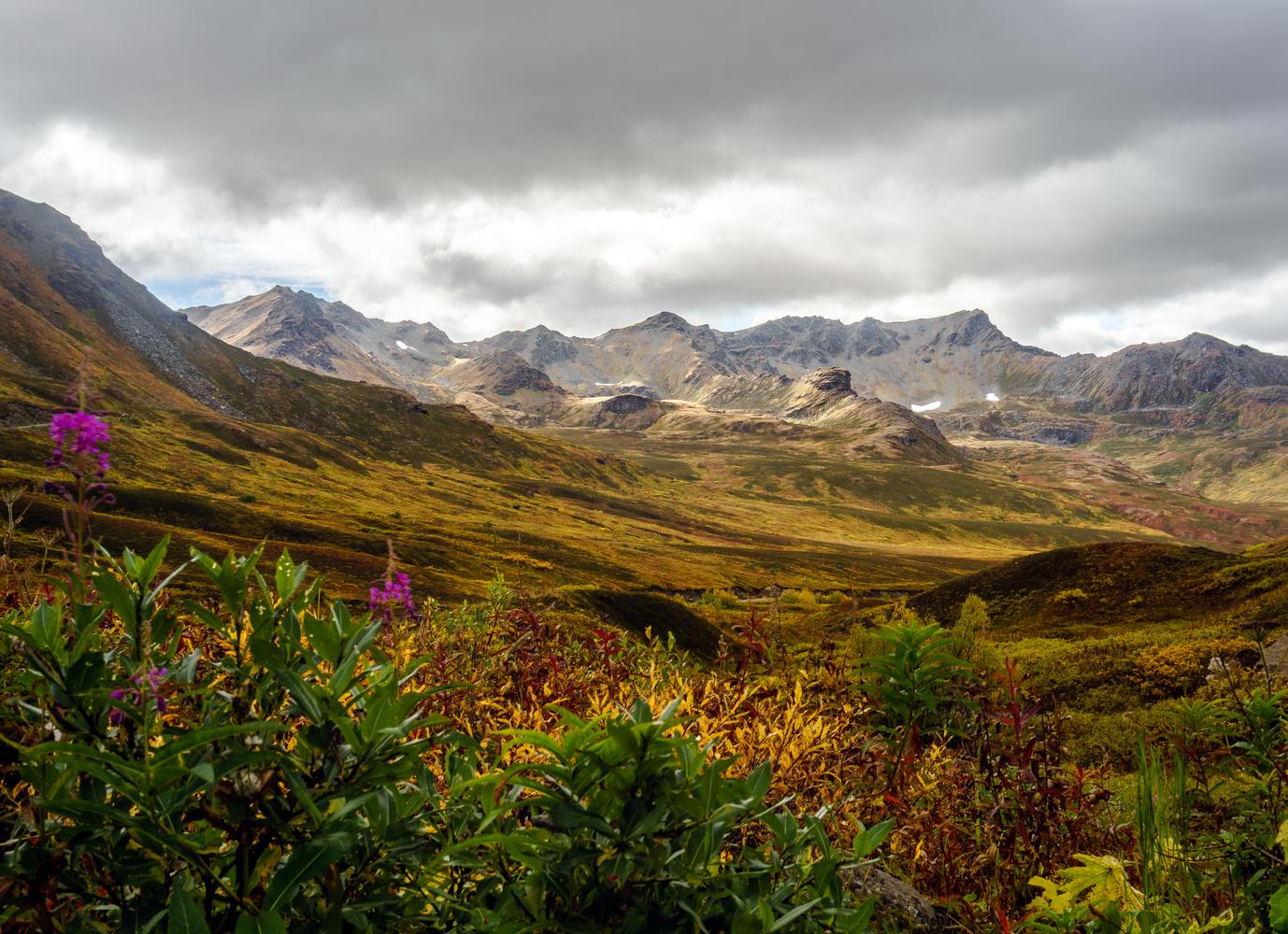 Bald Mountain Ridge by TYLER YATES