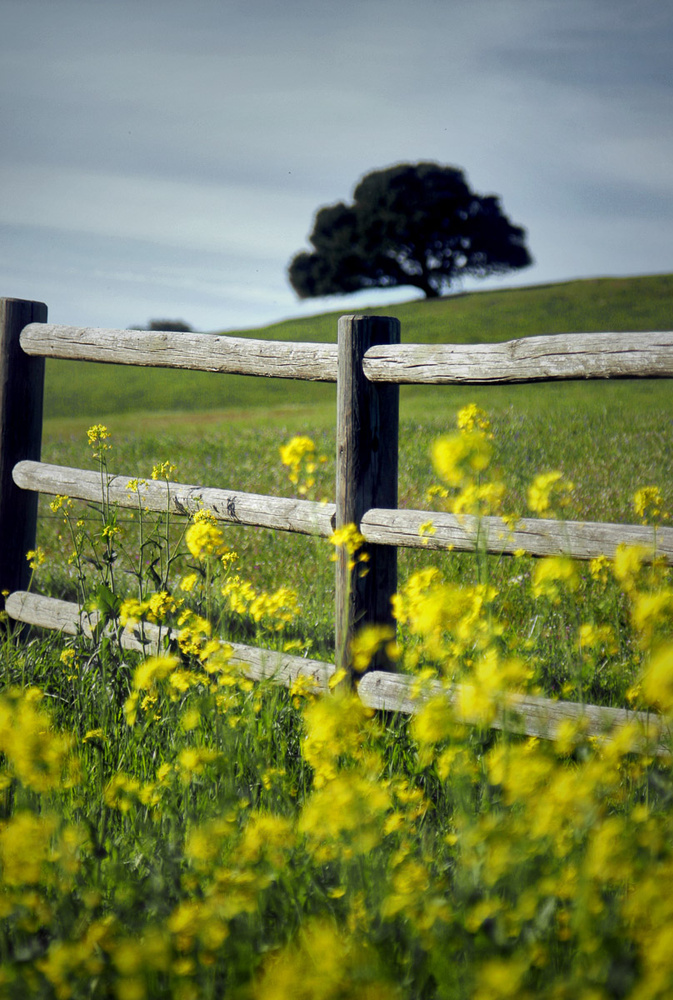 Fence Line by Dan Williams