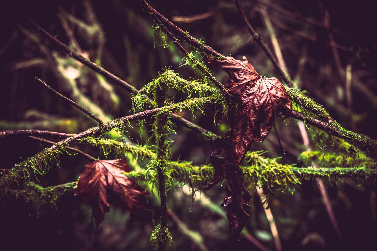 Post-rain Forest by Dan Williams