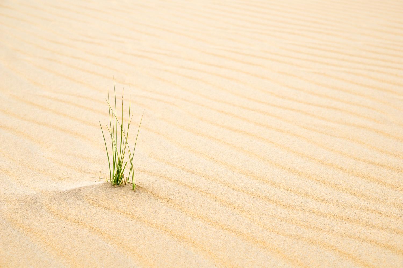 Barren Desert by Josh York