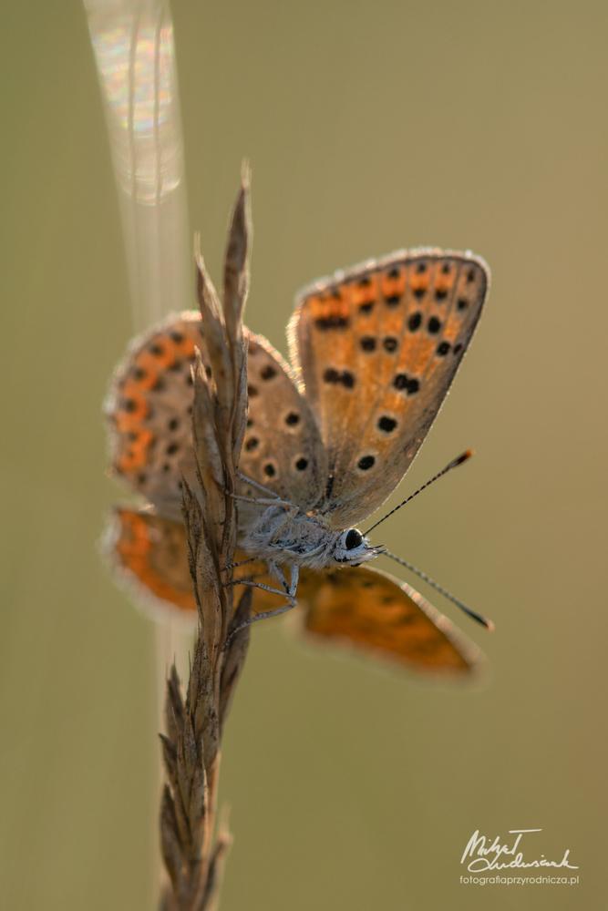 Butterfly by Michał Ludwiczak