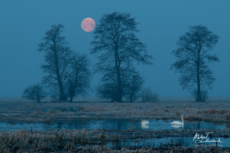 Under the moon by Michał Ludwiczak