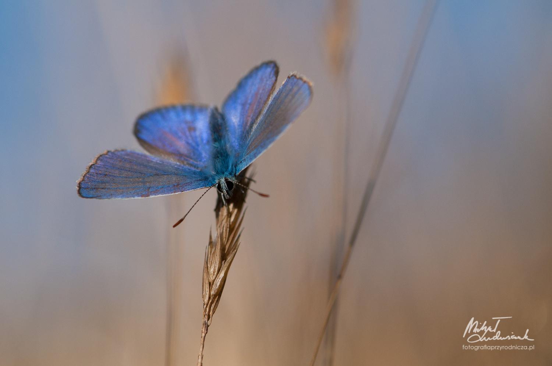 Blue by Michał Ludwiczak