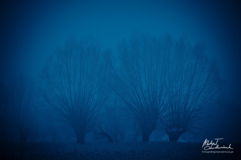 Willows by Michał Ludwiczak