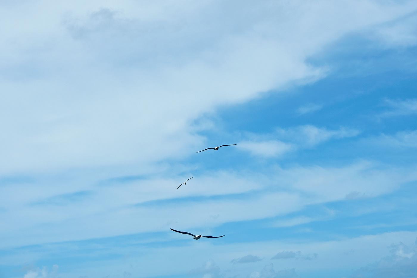 Blue sky by Isabela Gimenez