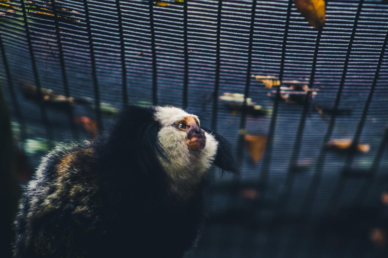 Monkey by Shane Saddler