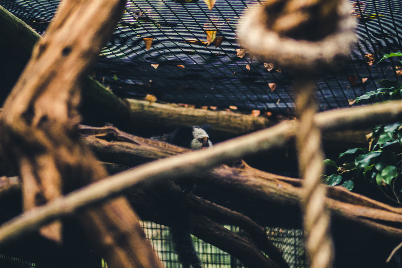 Monkey 2 by Shane Saddler