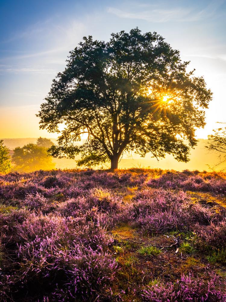 Summer tree by Remco Piet