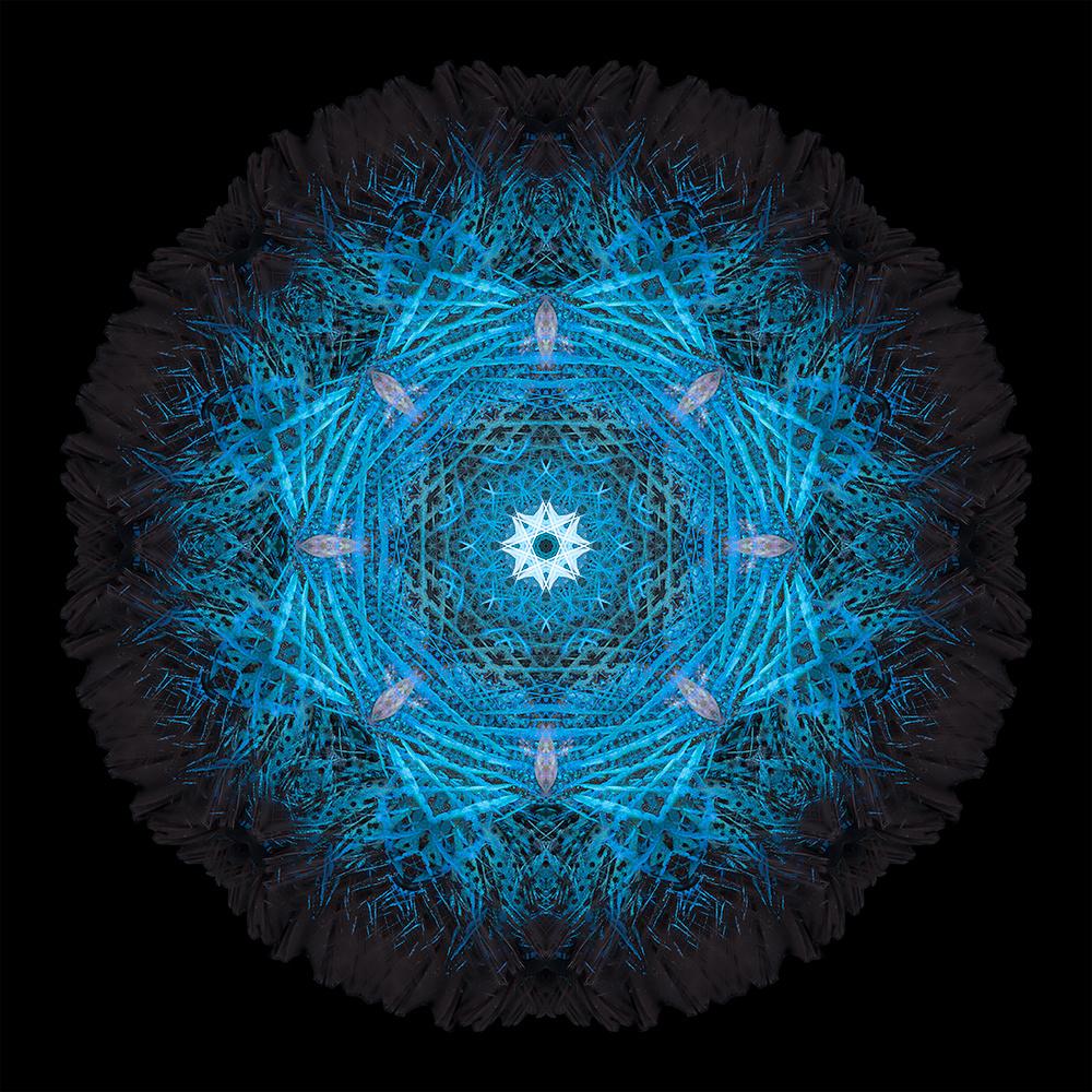 Patterns Tail Fish by Brigido Garcia A