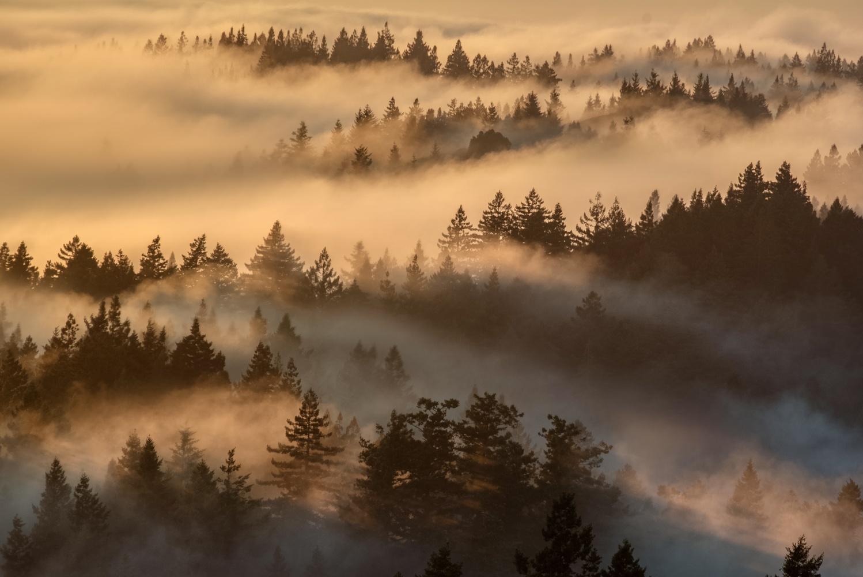 Mount Tamalpais by Ryan Fitzsimons