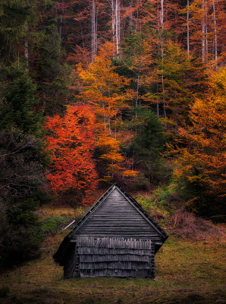 Surrounded by colors by Tiberiu Scarlat