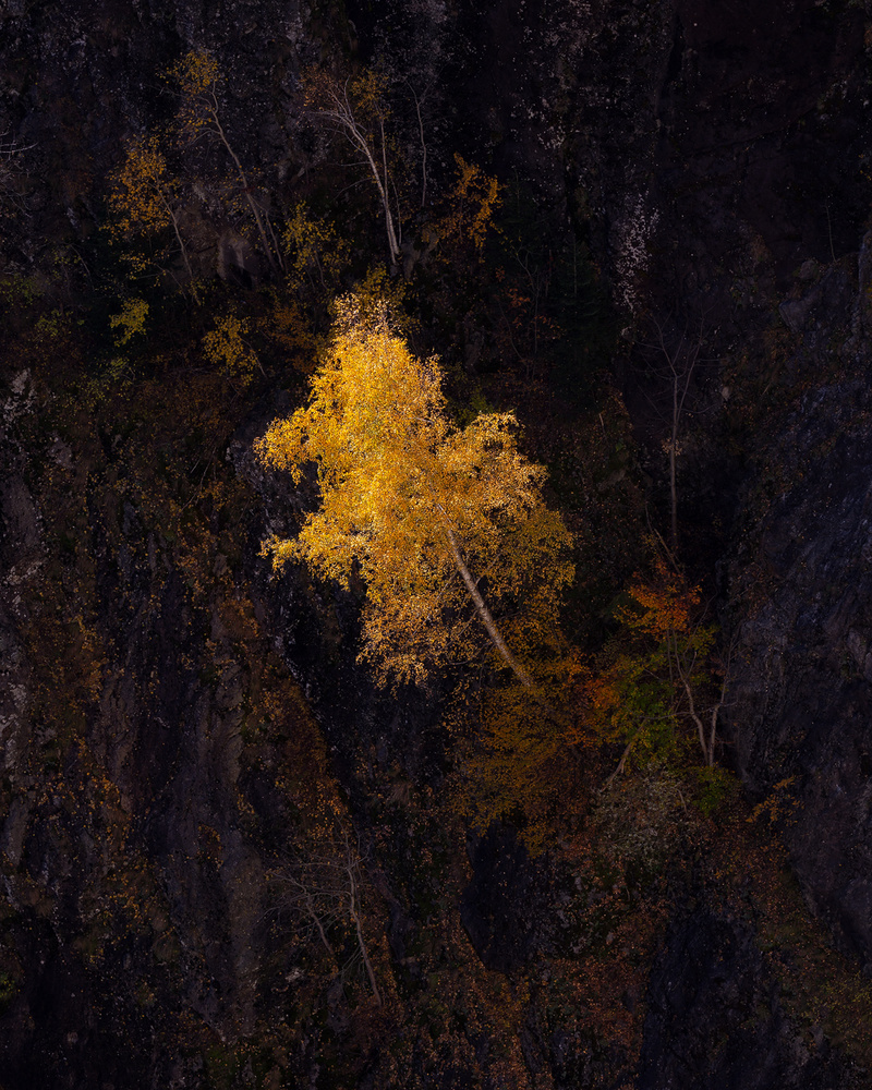 The Lonely Yellow by Tiberiu Scarlat