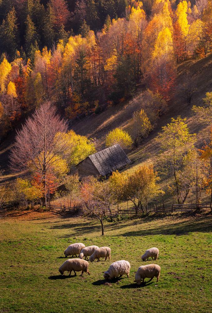 A sunny autumn day by Tiberiu Scarlat