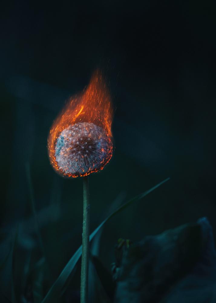 Dandelions have delicate souls by Yavor Minchev
