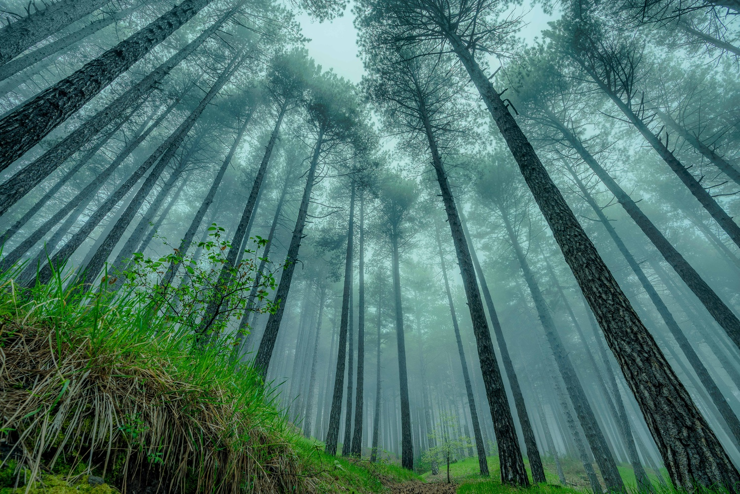 Mysterious Forest by Thijs Spuijbroek