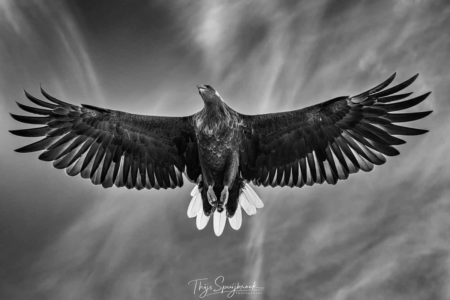 The Sea Eagle by Thijs Spuijbroek