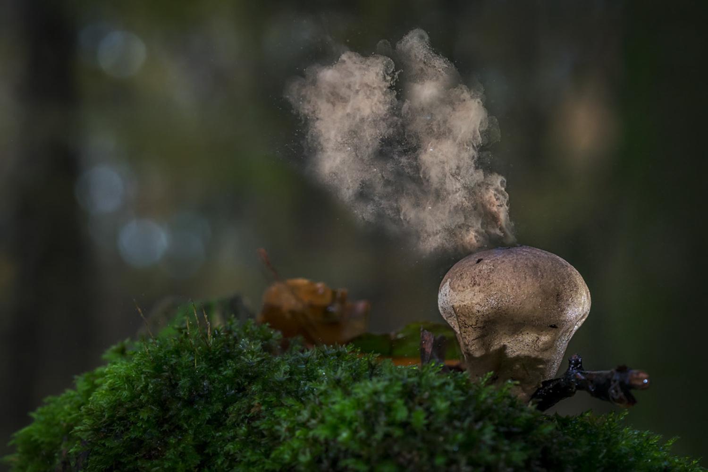 puffballs by Ralf von Samson