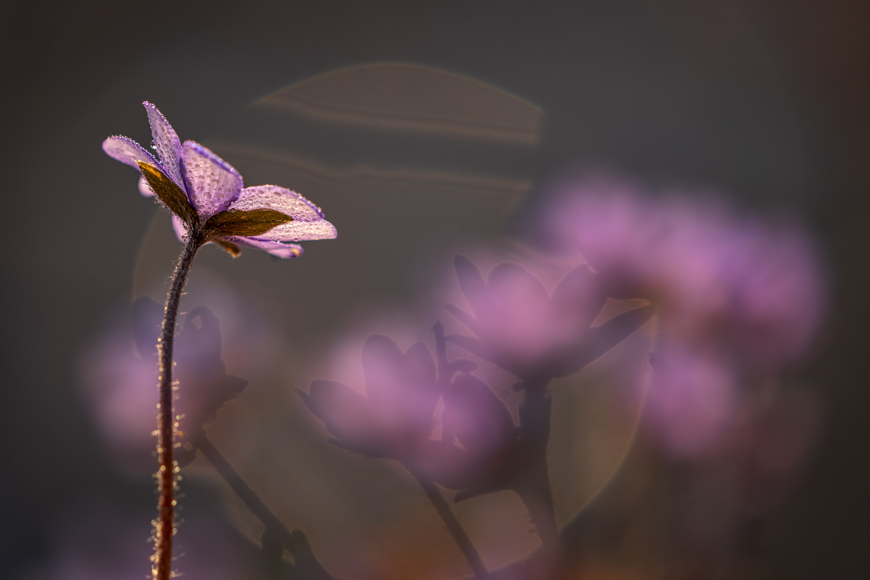Signs of the spring by Ralf von Samson