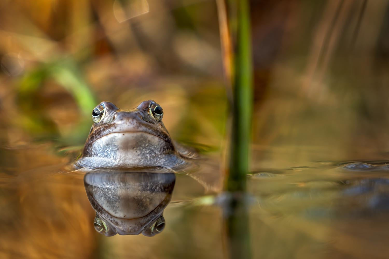 moor frog bride by Ralf von Samson