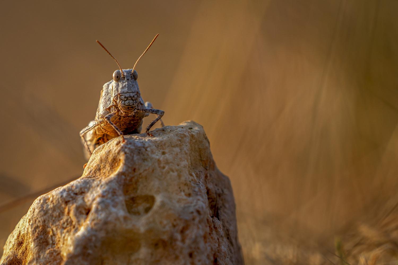 Grashopper by Ralf von Samson