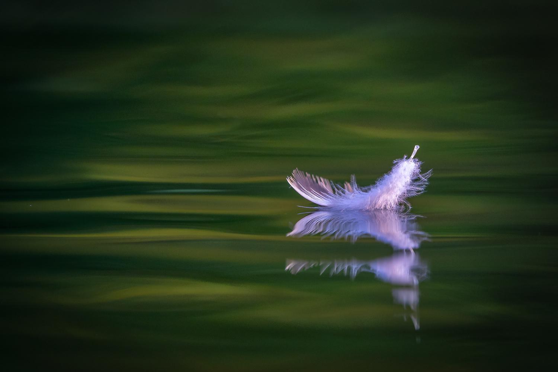 Dunes feather of a seagull by Ralf von Samson