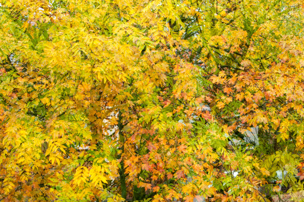 Fall foliage by Klaus Scherer