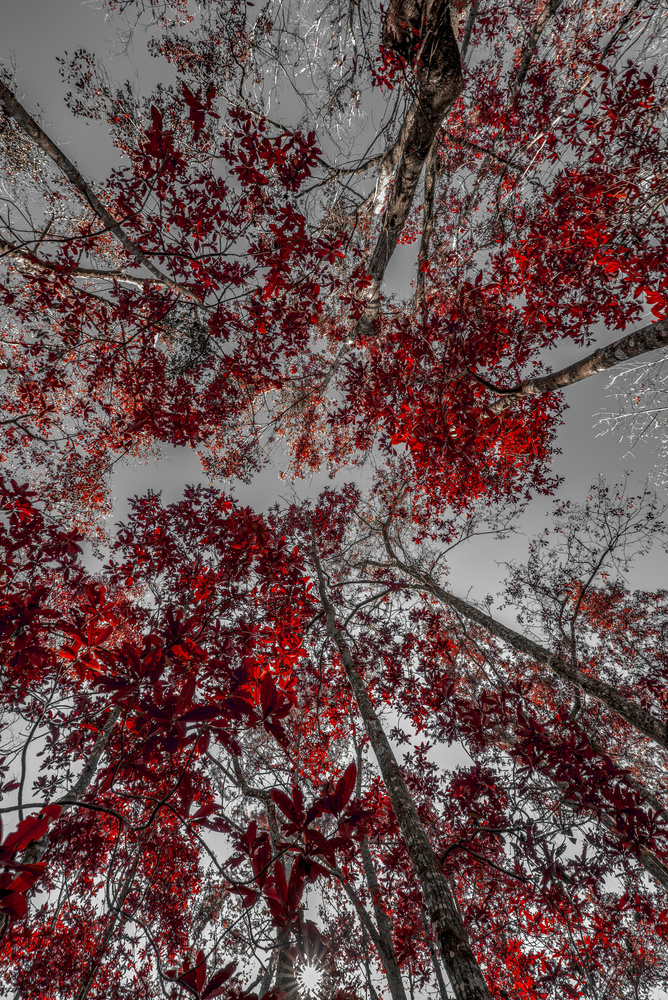 Leaves of Red by Kyle Rosenmeyer