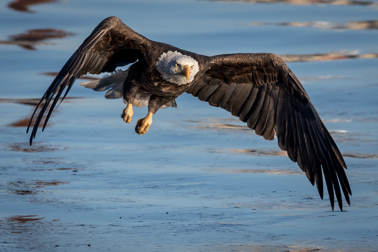 Mississippi River Eagle by Thomas Tarner