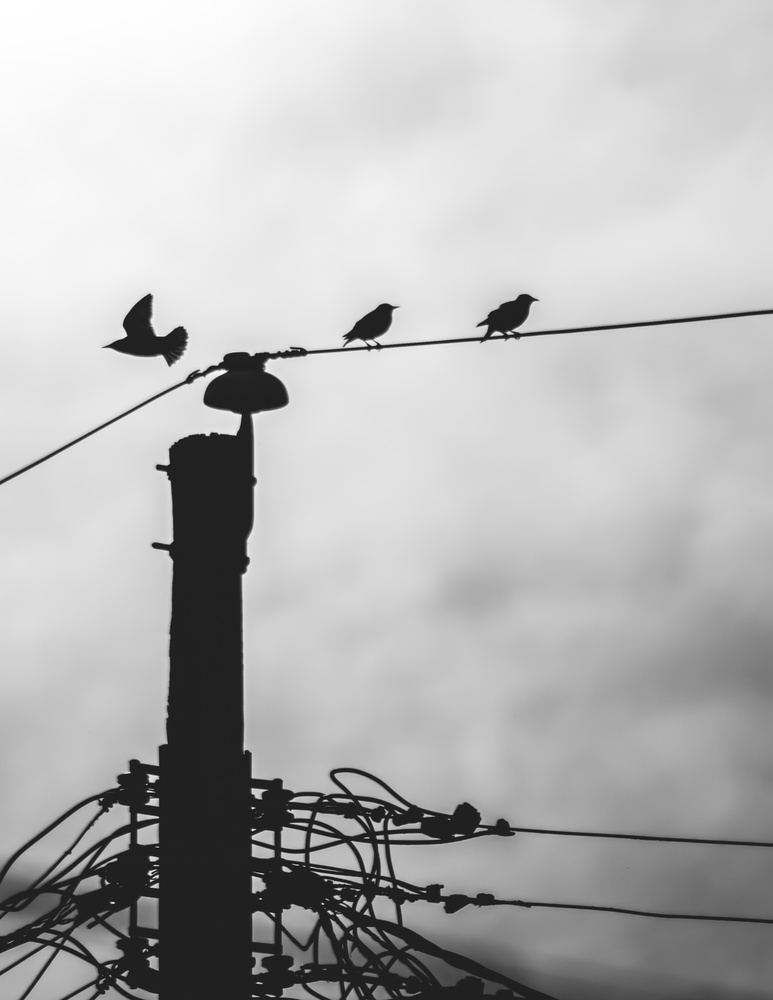Street Birds by Nathan Ruby