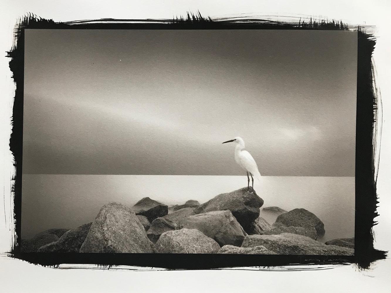 Egret by Dennis Ramos