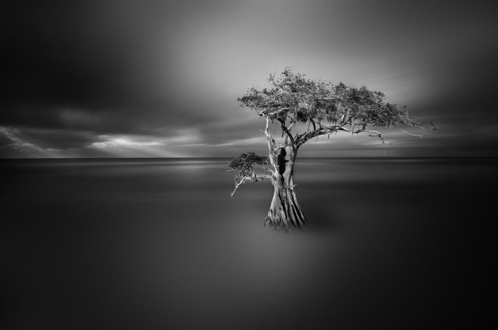 Cypress by Dennis Ramos