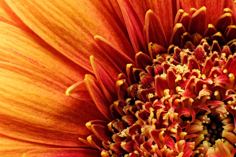 Bloom by Holger Vaga