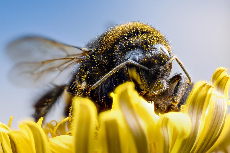 Bumblebee by Holger Vaga