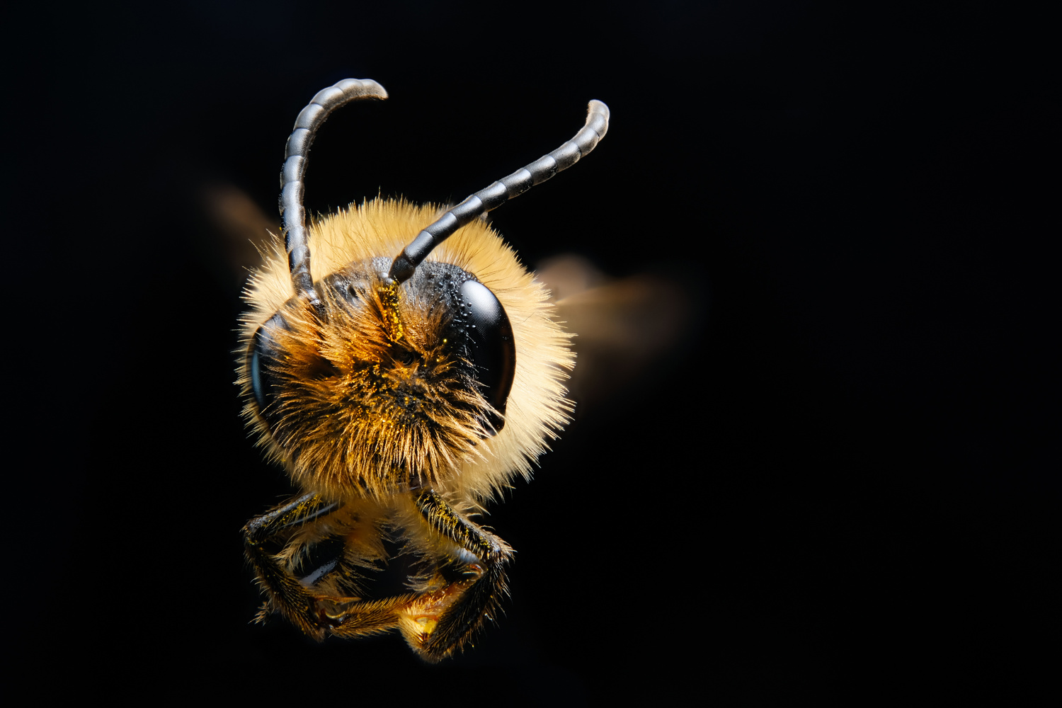 Flight of the Bee by Holger Vaga