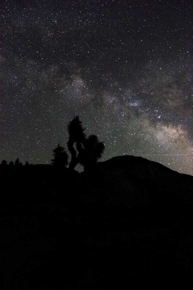 Milky Way over Joshua Tree by Markus Baumbach